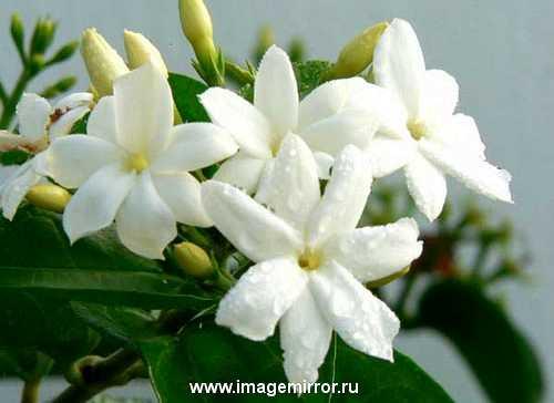 glavnye tsvety v parfyumernoy industrii 2