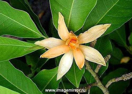 glavnye tsvety v parfyumernoy industrii 4